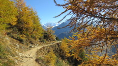 Pontresina, 11.10.17 (ritsch48) Tags: engadin graubünden pontresina schafberg höhenweg wanderweg pizpalü bellavista lärchen