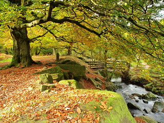 Autumn at Padley Gorge