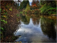 Waters edge (andystones64) Tags: eau river scotter waterway water foilage bushes trees nature naturephotography image imageof imagecapture daylight reflections