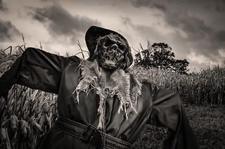 Hello Scarecrow