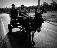 Por terras gandaresas... (verridário) Tags: street estrada preto branco noir black mono monochrome monocromatico bw nero bianco people gente pessoas campo sony rue portrait retrato photo foto rural sundaylights
