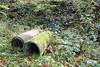 Herbstwald  (13) (StefanGollas) Tags: wald herbst rohre