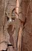 Sunbathing (Animal Al 18) Tags: lizard kruger southafrica africa reptile hepertology lowersabie canon canon70d 70d tamron canontamron tamronwildlife tamron150600 tmron