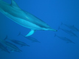 Dolphins on my 60th birthday