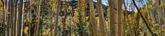 Santa Fe Forest Panorama - smaller (JoelDeluxe) Tags: santafenationalforest nmroad475 fall colors 2017 hdr joeldeluxe