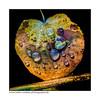 Blattwerk / foliage (H. Roebke) Tags: autumn de canon100400mmf4556lisiiusm color herbst nature germany 2016 fall natur forrest contrast niedersachsen farbe drops rural flora tropfen baum canon7dmkii lightroom foliage