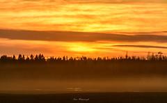 Sky is on Fire (swanhetmanczyk1) Tags: sunset sky trees canada alberta nikon d7100 dusk mist