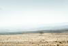 (alexandrabidian1) Tags: sky tree landscape desert travel iraq