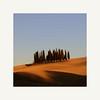 Cypresses (Enrico Cusinatti) Tags: toscana tuscany italia italy cipressi cypresses alberi paesaggio landscape enricocusinatti cielo sky minimalism minimalismo goldenhour travel viaggi vacation