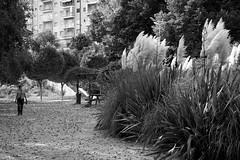 uno de noviembre (pepe amestoy) Tags: blackandwhite streetphotography people xixona spain fujifilm xe1 carl zeiss c biogon 2835 zm t m mount