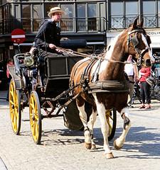 Horse drawn carriage,  Bruges,  Belgium. (Country Girl 76) Tags: horse drawn carriage bruges belgium male street travel skewbald