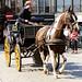 Horse drawn carriage,  Bruges,  Belgium.