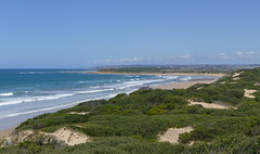 Looking across the sand dunes (The Pocket Rocket, On and Off.) Tags: breamlea sanddunes southernocean victoria australia