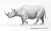 Cómo dibujar un rinoceronte negro - Narrado