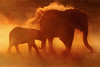 Elefantes Africanos - African Elephant - Etosha NP - Namibia (Gaston Maqueda) Tags: namibia etosha elefante elephant wild salvaje wildlife fauna naturaleza nature safari d50 africa sunset orange dust polvo atardecer silueta