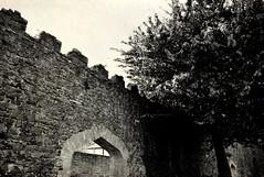 Antrim Castle Gardens, River walk to Lough Neagh (John Panneman Photography) Tags: wall castle tree riverwalk loughneagh antrim gardens stone panneman northernireland uk nikon d610