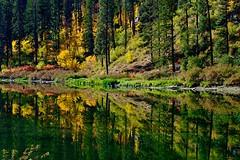 Autumn Reflections (otterdrivernw) Tags: xf18135 fujinon xt2 fujixt2 fujix fuji fujifilm canyon tumwatercanyon wenatchee autumn color fall trees water reflections