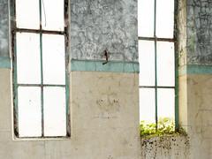 Window Box (dunard54) Tags: stoneyholm mill kilbirnie wj knox ayrshire manufacturing open doors