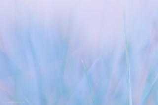 blue grass glimmer 10/31 & 41/52