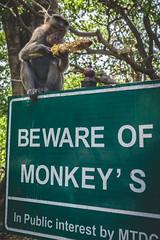 Mumbai - Bombay - Elephanta Island-3