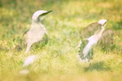 Freedom (Martha VFS) Tags: sliderssunday 7dwf hss bird freedom fauna