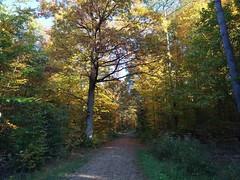 autumn forest (Stiller Beobachter) Tags: forest path autumn