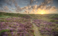 Purple trail (blavandmaster) Tags: sky heidekraut 6d kleuren hemel wolken heide lys denmark landscape pine zonsondergang colours himlen sand beautiful lyng countryside lumière jylland dunes sonnenuntergang skyer blåvand erica photomatix hill 2017 hede canon summer sable handheld atardecer hdr ciel danish zand 39000000 paysage nuages interesting processing awesome eau landskabet 39millions light dänemark christiankortum landschaft solnedgang himmel jütland denemarken danmark clouds blavand fields heather coucherdesoleil eté garrigue eos6d pinède
