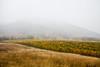 IMG_4101 (Niki.Suppan) Tags: vienna autumn fall october oktober herbst wien wanderung wandern leopoldsberg hügel herbstfarben fog nebel nebelig wine vineyard wanderpfad stadtwanderweg canon eos ef 2470mm 28 f28 dslr slr spiegelreflexkamera vollformat fullframe 5dii