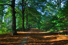 Dutch autumn gold (katy1279) Tags: cycling holland woodland autumn colours nature beautiful trees leaves