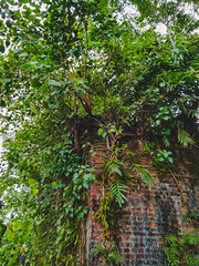 Green Wall. (N i B i R) Tags: sunamganj sylhetdivision bangladesh bd green architecture abandoned brick wall tree nature redmi xiaomi mobile phone red