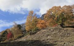 automne à Randonne (bulbocode909) Tags: valais suisse fully randonnaz montagnes nature automne arbres alpages nuages paysages vert bleu jaune rouge orange