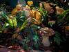 Lens flare sunbeam (Yohtine) Tags: herbstoktoberwaldmönsheimpilze sunbeam sonnenstrahl herbst november autumn fliegenpilz gegenlicht farn funkie stimmung
