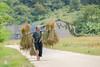 _Y2U0594.0917.Chí Viễn.Trùng Khánh.Cao Bằng (hoanglongphoto) Tags: asia asian vietnam northvietnam northeastvietnam people life dailylife women oldwoman gammer road oldman oldster walkingontheroad harvestingseason harvest canon canoneos1dx canonef70200mmf28lisiiusmlens đôngtbắc caobằng trùngkhánh chíviễn tl206 người cuộcsống đờithường mùagặt ngườigià phụnữ bàgià gánhlúa đibộ đibộtrênđường caobằngmùagặt caobằngmùalúachín đườngđi conđường roadpics peopleintheworld