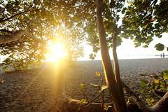 Au prés de mon arbre ... (Tomtompao) Tags: martinique lecarbet coucherdesoleil plage