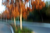 approach (JonathanCohen) Tags: road tree trees icm blur motionblur fall autumn streaks sunset afternoon