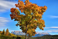 (lucamarasca1) Tags: autumn autunno nikond5500 tree nationalgeographic italy italia panoramic paesaggio view panorama colorful nikkor nikon clouds sky background landscape altoadige bolzano nature mountains