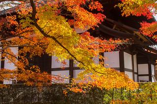 The Red Maple Leaves of Tōfuku-ji Temple (東福寺) in Kyoto!
