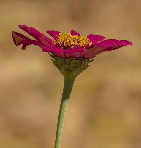 Ultimo fiore con Bokeh autunnale