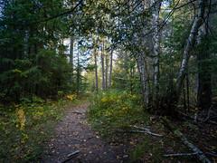 Autumn at the Lake (Keith Levit) Tags: autumn ontario canada hasselbladx1d lakeofthewoods