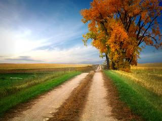 Prairie road 11