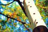 Lampara (MarioF.) Tags: madera cielo hueco lampara