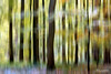 Blur and glow (Toucaly) Tags: wood autumn sunny underwood undergrowth picardie directionnel directional oise laneuvilleenhez ensoleillé graphicdesign graphisme forest automne fall forêt europe sousbois france
