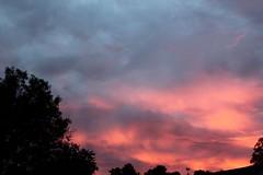 I woke up to a pink sky (cynthiarobb) Tags: