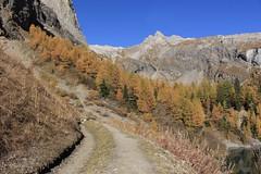 Tzeusier (bulbocode909) Tags: valais suisse tzeusier lacdetzeusier montagnes nature automne lacs forêts arbres chemins mélèzes jaune bleu vert paysages