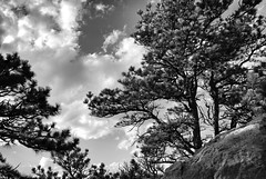 Pines & Clouds (Never Exceed Speed) Tags: pine trees natural colorado landscape reservoirridgenaturalarea ftcollins scenery black white