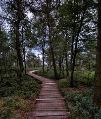 Der Weg ins Moor (Rose N. Kohl) Tags: moor steg baum bäume tree holz web hdr nature germany schwarzesmoor birken nikon outdoor landschaft landscape