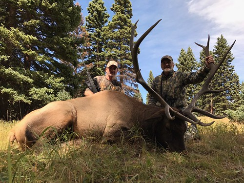 New Mexico Luxury Elk Hunt | Family Expeditions
