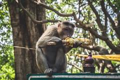 Mumbai - Bombay - Elephanta Island-2