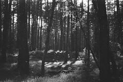 fortepan-100-10 (Vasily Ledovsky) Tags: 35mm expired film forte bw fortepan 100 blackwhite voigtlander canon bessat ltm 50mm 18 monochrome