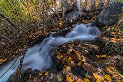 Stream side (Middle aged Nikonite) Tags: stream water flowing forest nature tranquil outdoor landscape nikon d750 california 11mm irix autumn colors